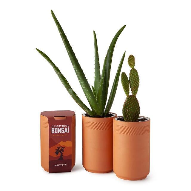Indoor Desert Grow Kit